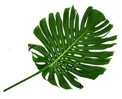 http://www.veganparadice.com.mx/wp-content/uploads/2018/03/tropical-leaf.png
